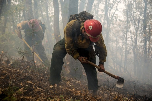 "Stanislaus Hotshot Sean Alvarez digs a fire line around a spot fire on the so-called ""Rough Fire"" in the Sequoia National Forest, California, August 21, 2015. In California, suffering its worst drought on record, about 2,500 people were forced to flee Christian camps east of Fresno at Hume Lake as the so-called Rough Fire crossed Highway 180, officials said. (Photo by Max Whittaker/Reuters)"