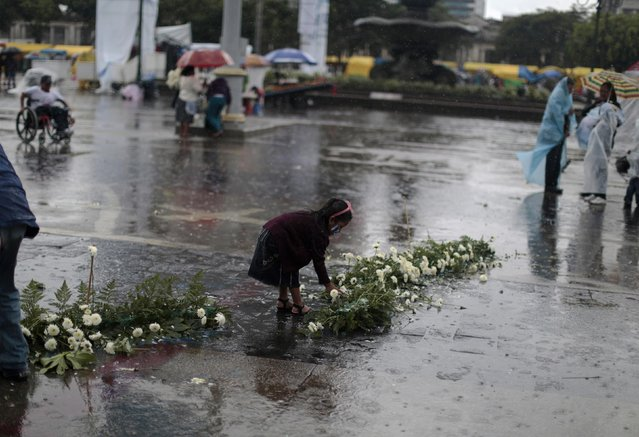 A girl picks flowers from a floral arrangement used during Independence Day celebrations as it rains in downtown Guatemala City September 15, 2014. Guatemala celebrates its Independence Day on September 15. (Photo by Jorge Dan Lopez/Reuters)