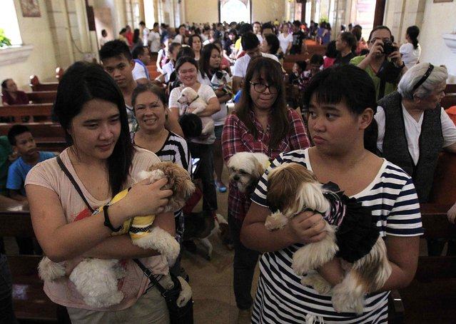 People carrying their pets queue during a celebration of the feast day of the Patron Saint of Animals, Saint Francis of Assisi, at a Catholic church in Manila October 5, 2014. (Photo by Romeo Ranoco/Reuters)