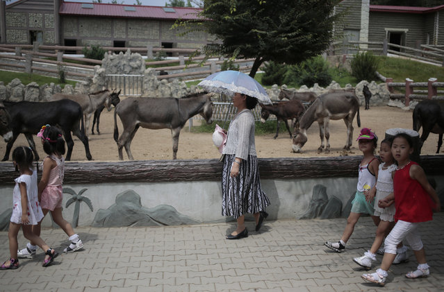 A North Korean woman walks past by a donkey pen at the newly opened Pyongyang Central Zoo in Pyongyang, North Korea, Tuesday, August 23, 2016. (Photo by Dita Alangkara/AP Photo)