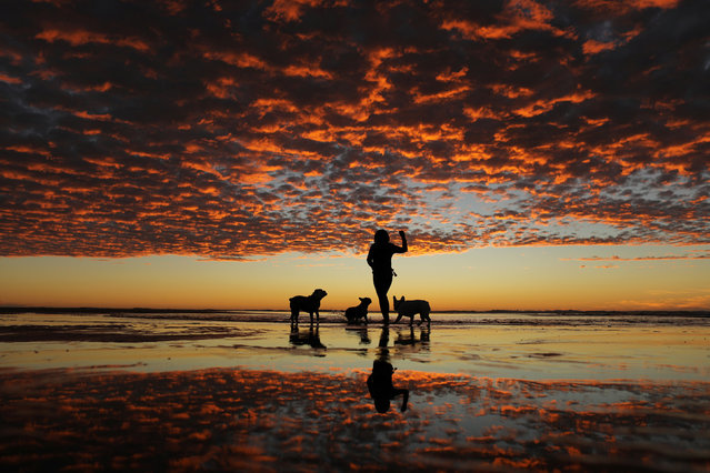 A woman plays with her three dogs at the beach after sunset in Del Mar, California, USA on November 10, 2017. (Photo by Mike Blake/Reuters)