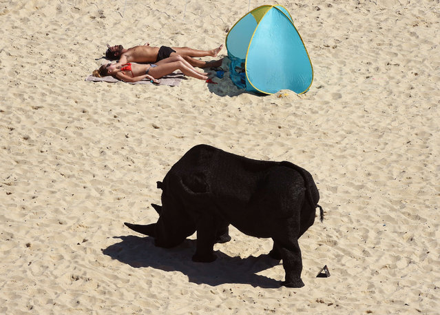 "A couple sunbath near a sculpture by Australian artist Mikaela Castledine, titled ""Gift of the rhinoceros"" on Sydney's Tamarama Beach as artists from 16 countries prepare their works for the upcoming Sculpture by the Sea exhibition, on October 23, 2014. (Photo by William West/AFP Photo)"