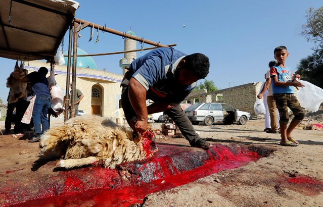 Men slaughter sheep during the Muslim festival of Eid al-Adha in Baghdad, Iraq September 12, 2016. (Photo by Ahmed Saad/Reuters)