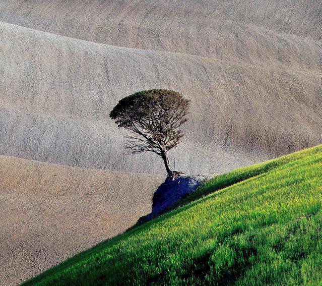 """Tree"". (Photo and comment by Marek Andrzejewski, Poland/2013 Sony World Photography Awards"