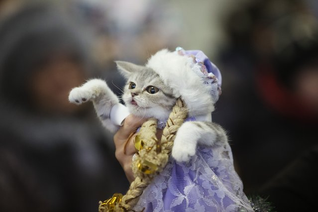"A woman holds a dressed cat during the exhibition ""Autumn-2014"" in Minsk, November 23, 2014. (Photo by Vasily Fedosenko/Reuters)"