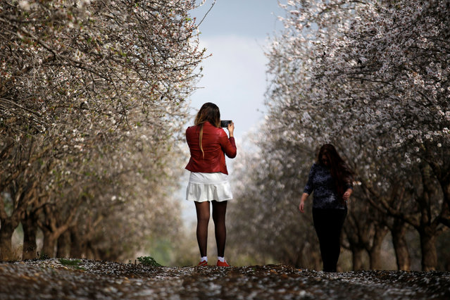 A woman poses for a photo in an almond plantation near Kiryat Gat, Israel February 17, 2018. (Photo by Amir Cohen/Reuters)