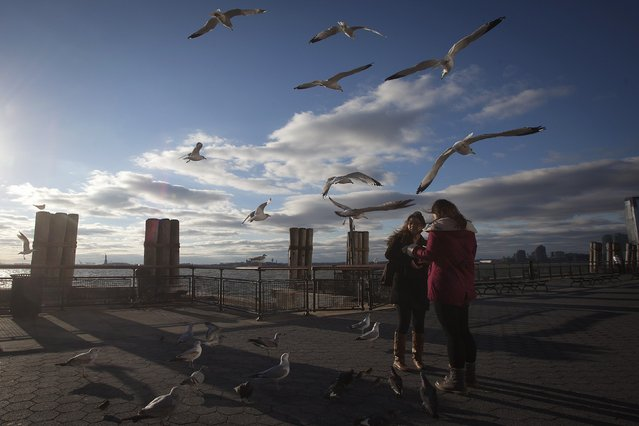 People feed the birds in Battery Park in the Manhattan borough of New York, December 18, 2014. (Photo by Carlo Allegri/Reuters)