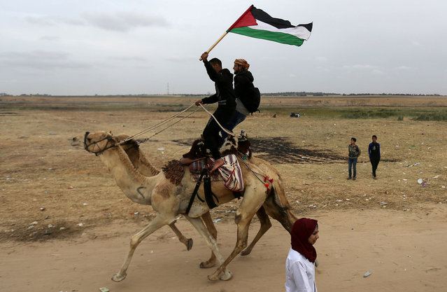 Palestinians ride camels during a local race near the Israel-Gaza border, east of Khan Younis in the southern Gaza Strip, April 3, 2018. Picture taken April 3, 2018. (Photo by Ibraheem Abu Mustafa/Reuters)