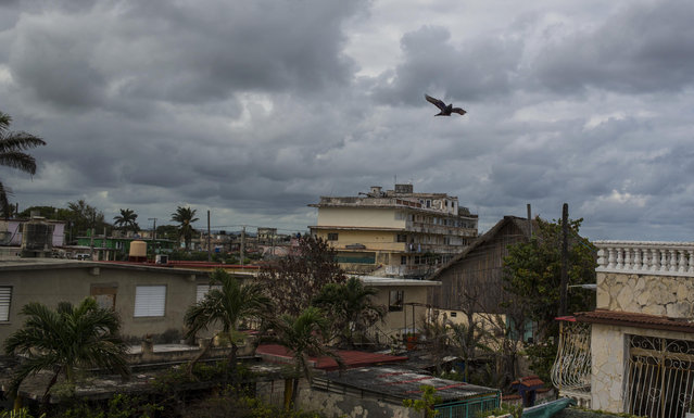 In this Saturday, November 4, 2017 photo, a racing pigeon that belongs to breeder Ernesto Eng Lopez flies over Havana, Cuba. Pigeon breeders trade or sell the birds to other aficionados, adding to the ever-growing stock of available birds in the market and keeping the pigeon craze dynamic and growing throughout Cuba. (Photo by Desmond Boylan/AP Photo)