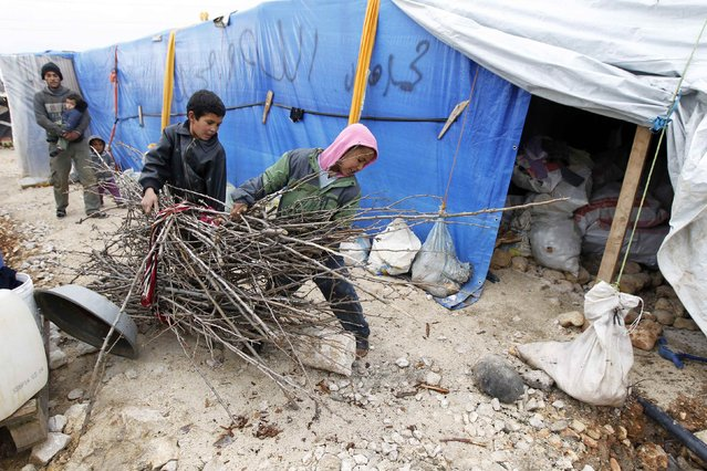 Syrian refugee boys carry wood to be used for heating at a makeshift settlement in Bar Elias in the Bekaa valley January 5, 2015. (Photo by Mohamed Azakir/Reuters)