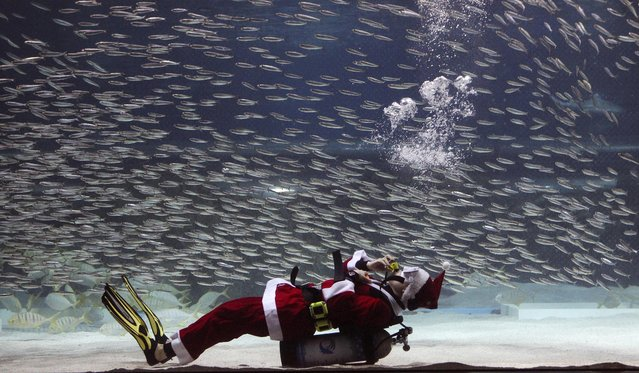 A diver dressed in a Santa Claus costume performs with sardines at the Coex Aquarium in Seoul, South Korea, Wednesday, December 9, 2015. (Photo by Ahn Young-joon/AP Photo)