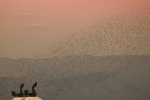 Murmuration of starlings float over the Vittoriano monument as the sun sets in Rome, Italy, November 18, 2020. (Photo by Guglielmo Mangiapane/Reuters)
