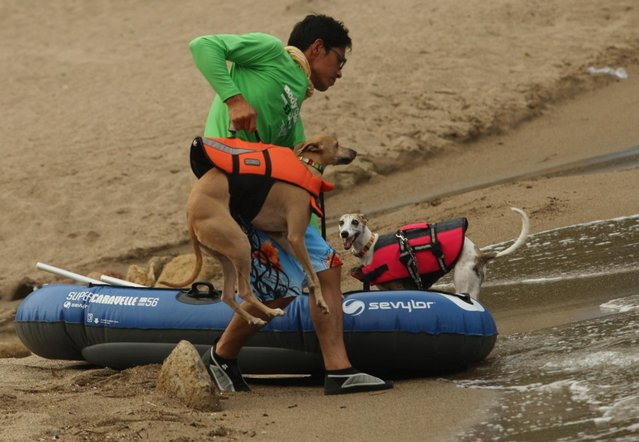 A man brings his dog Rodem for a swim at Takeno Beach on August 4, 2013 in Toyooka, Japan. This beach is open for dogs and their owners every summer between the months of June and September. (Photo by Buddhika Weerasinghe/Getty Images)