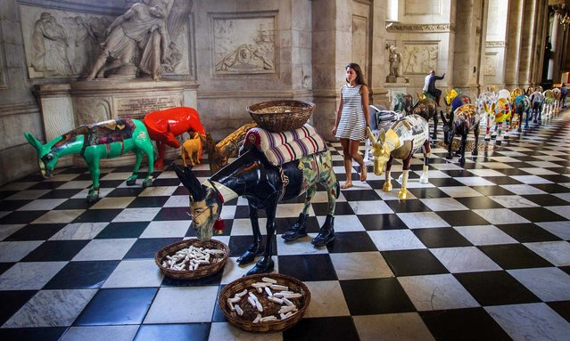 Some of the 25 life size painted donkeys on display in St Paul's Cathedral in central London from Cairo, in the name of peace and compassion, as part of the CARAVAN interfaith art exhibition, on August 30, 2013.The exhibition features the work of Western and Egyptian artists, both Muslim and Christian, who were each asked to decorate a life-size fibreglass donkey that was sculpted by the noted Egyptian artist Reda Abdel Rahman. (Photo by Lewis Whyld/PA)