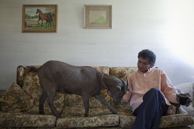Cyrus Fakroddin and his pet goat Cocoa relax at their home in Summit, New Jersey April 7, 2012. (Photo by Allison Joyce/Reuters)