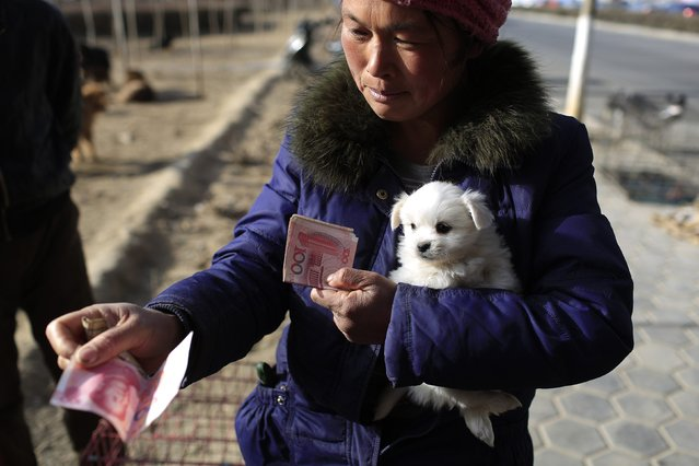 A vendor buys a dog at a street pet dog market in Lanzhou, Gansu province, February 15, 2015. (Photo by Aly Song/Reuters)