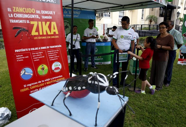 A model of a mosquito is exhibited during a campaign to raise awareness of preventing the entry of the Zika virus into the country, at the Health Ministry in Lima, Peru January 27, 2016. The Peruvian Health Ministry is organising a campaign to help prevent the spread of the Zika virus and other mosquito-borne diseases. (Photo by Mariana Bazo/Reuters)