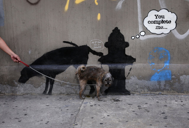 A dog urinates on a new work by British graffiti artist Banksy on West 24th street in New York, October 3, 2013. (Photo by Mike Segar/Reuters)