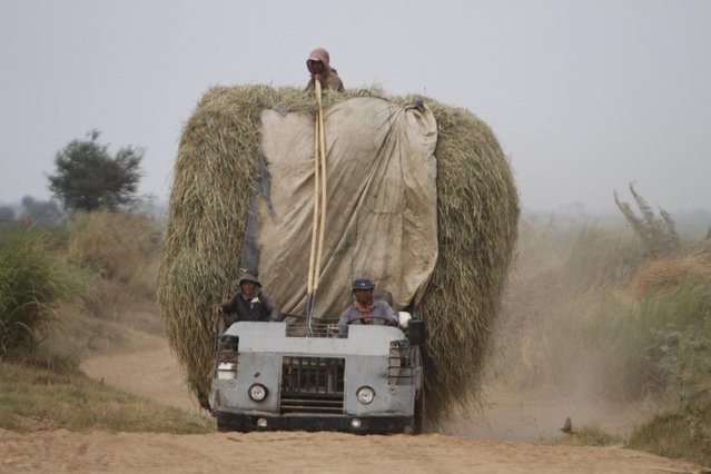 Cambodian farmers transport hay by using their homemade truck at a remote rural area near the Mekong river of Russey Chroy village, Kandal province, north of Phnom Penh, Cambodia, Tuesday, March 31, 2015. (Photo by Heng Sinith/AP Photo)