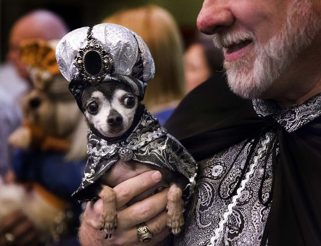 A costumed pet and his owner attend the 2014 New York Pet Fashion Show at the Hotel Pennsylvania, Friday, February 7, 2014, in New York. (Photo by John Minchillo/AP Photo)