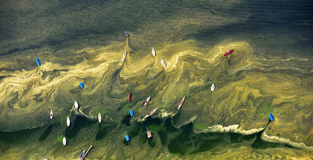 Sailing boats are floating near the banks of Lake Starnberg, that is covered with a layer of pollen in Starnberg, southern Germany, Friday, May 8, 2015. (Photo by Peter Kneffel/AP Photo/DPA)