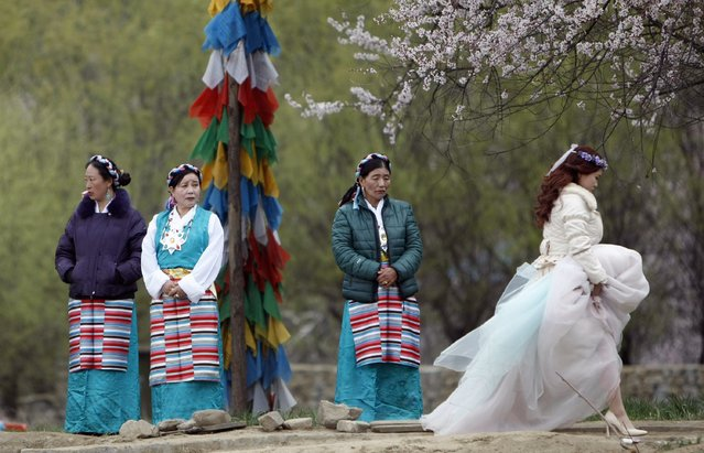 A woman in a wedding dress walks past women in Tibetan costumes during a Peach Blossom Festival in Nyingchi Prefecture, Tibet Autonomous Region, March 27, 2014. Picture taken March 27, 2014. (Photo by Jacky Chen/Reuters)