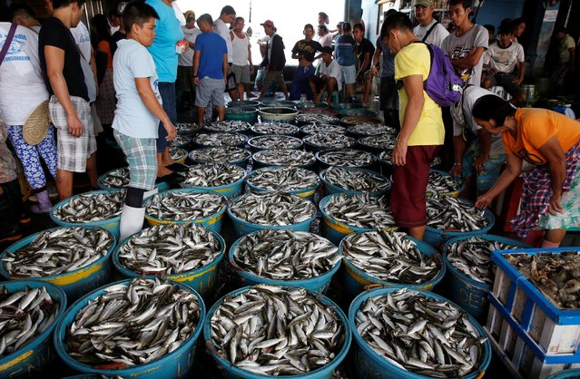 Vendors display their fish at a wholesale market at Navotas Fish Port in Navotas, Metro Manila, Philippines May 21, 2016. (Photo by Erik De Castro/Reuters)