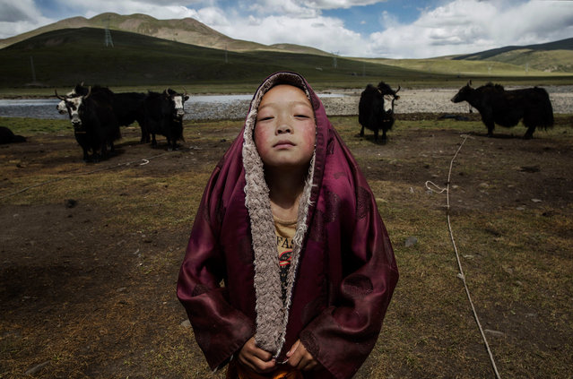 A young Tibetan Buddhist novice monk stands with his yak herd at the family's nomadic summer grazing area on July 24, 2015 on the Tibetan Plateau in Yushu County, Qinghai, China. (Photo by Kevin Frayer/Getty Images)