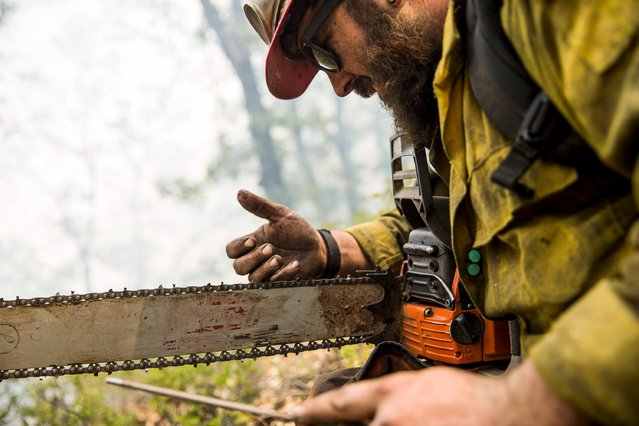 "Stanislaus Hotshot Ryan Galloway checks the edge on his saw while sharpening during a break on the so-called ""Rough Fire"" in the Sequoia National Forest, California, August 21, 2015. (Photo by Max Whittaker/Reuters)"