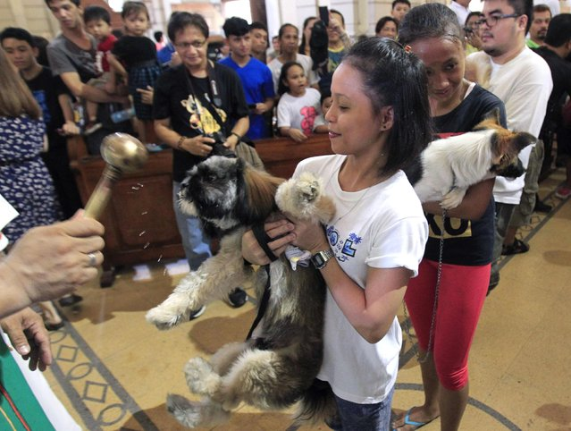 A Catholic priest blesses a dog during a celebration of the feast day of the Patron Saint of Animals, Saint Francis of Assisi, at a Catholic church in Manila October 5, 2014. (Photo by Romeo Ranoco/Reuters)