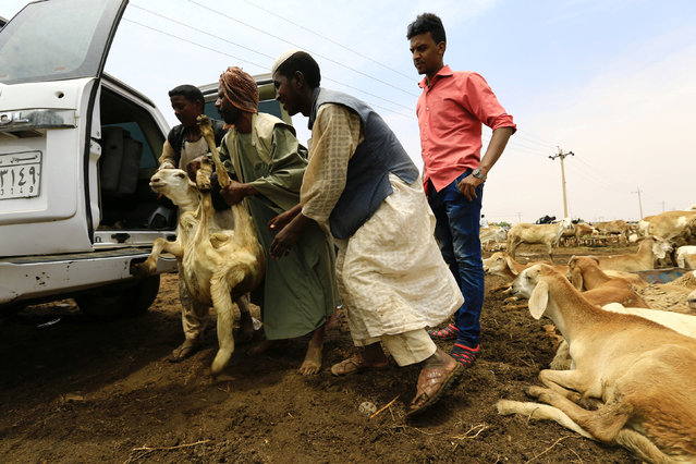 People load a sheep into a vehicle during preparations ahead of the Eid al-Adha festival in Khartoum September 11, 2016. (Photo by Mohamed Nureldin Abdallah/Reuters)