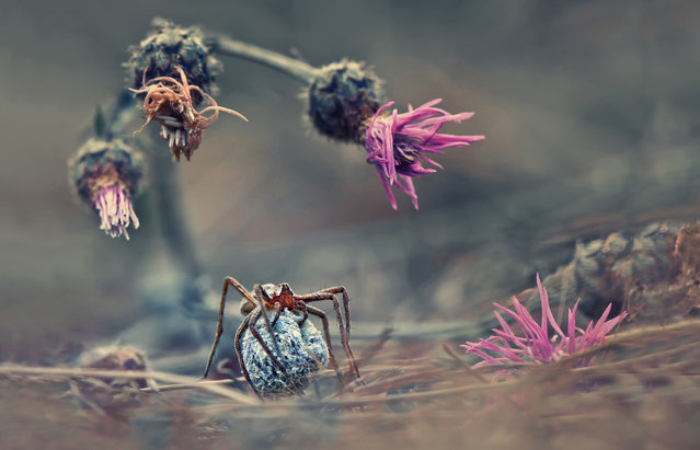 """""""Welcome to the world of the spider"""". (Photo and comment by Krasimir Matarov, Bulgaria/2013 Sony World Photography Awards"""