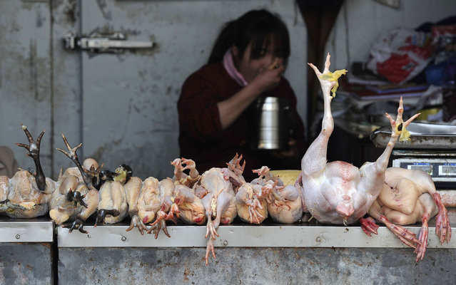 A vendor eats as she waits for customers at a poultry market in Hefei, Anhui province, April 1, 2013. Two people in Shanghai, one of China's largest cities, died this month after contracting a strain of avian influenza that had never been passed to humans before, the official Xinhua News Agency reported on Sunday. (Photo by Stringer/Reuters)