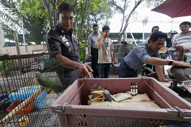 A police officer stands among caged animals during a raid on the outskirts of Bangkok June 10, 2013. (Photo by Kerek Wongsa/Reuters)