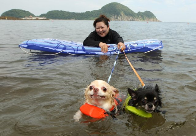 A woman and her two dogs named Yoru (R) and Hinaka bath in the water at Takeno Beach on August 4, 2013 in Toyooka, Japan. This beach is open for dogs and their owners every summer between the months of June and September. (Photo by Buddhika Weerasinghe/Getty Images)