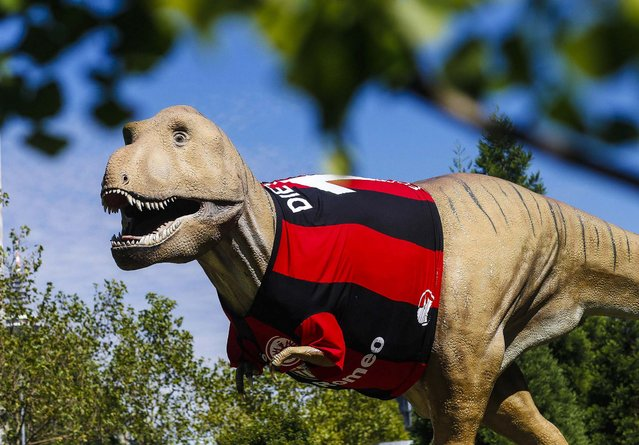 A life-size Tyrannosaurus rex statue, dressed with a jersey of the Bundesliga soccer team Eintracht Frankfurt, stands in front of the Senckenberg Natural Museum in Frankfurt, on August 16, 2013. The jersey was placed on the statue in preparation for the August 17 match when Eintracht faces FC Bayern Munich in its first home game of the Bundesliga season. (Photo by Ralph Orlowski/Associated Press)