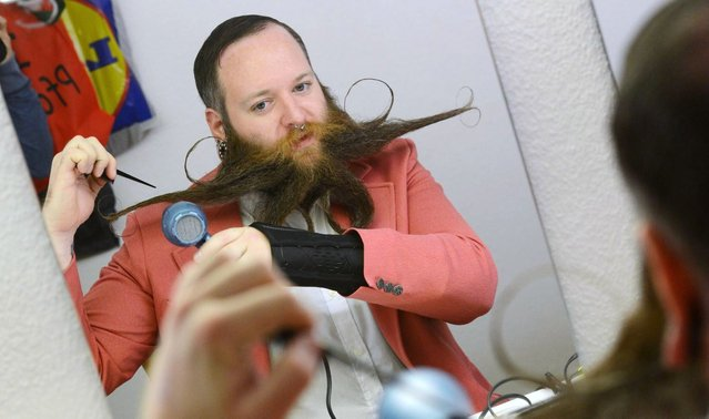 Brandon Biggens uses a hairdryer to style his beard as he prepares for the Beard World Championships on November 2, 2013 in Leinfelden-Echterdingen, southern Germany. More than 200 competitors from over 20 countries will take part in the event. (Photo by Franziska Kraufmann/AFP Photo/DPA)