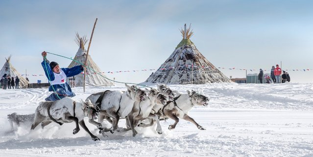 A Nenets rides a sled during a reindeer race on the Reindeer Herders' Day in the city of Nadym, in Yamal-Nenets Region, about 1,550 miles northeast of Moscow, Russia, on March 28, 2016. (Photo by Sergey Anisimov/Anadolu Agency/Getty Images)