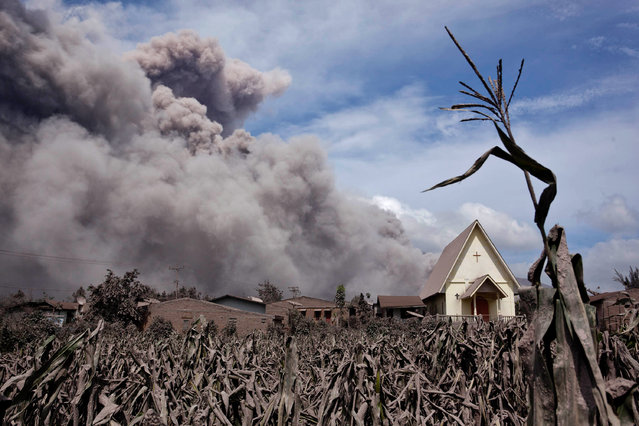 Mount Sinabung spews pyroclastic smoke, seen from Sibintun village on January 8, 2014 in Karo District, North Sumatra, Indonesia. (Photo by Ulet Ifansasti/Getty Images)