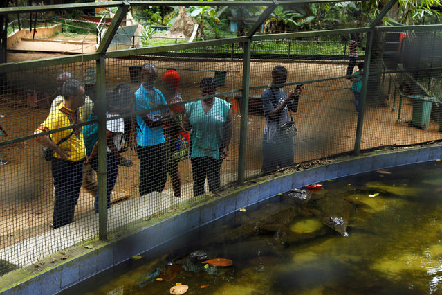 People stand as they look through to the enclosure of West African Slender-snouted Crocodiles at the zoo of Abidjan, Ivory Coast September 9, 2016. (Photo by Luc Gnago/Reuters)