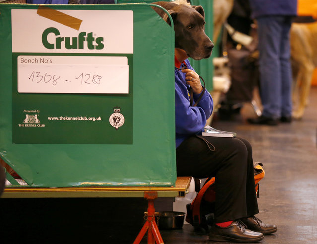 A woman sits with a Great Dane during the first day of the Crufts dog show in Birmingham, central England March 6, 2014. (Photo by Darren Staples/Reuters)