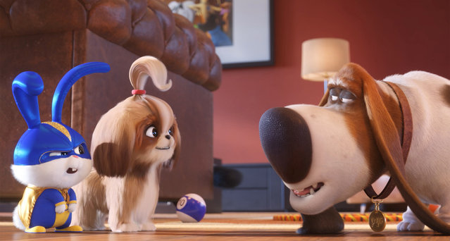 "This image released by Universal Pictures shows, from left, Snowball, voiced by Kevin Hart, Daisy, voiced by Tiffany Haddish and Pops, voiced by Dana Carvey in a scene from ""The Secret Life of Pets 2"". (Photo by Illumination Entertainment/Universal Pictures via AP Photo)"
