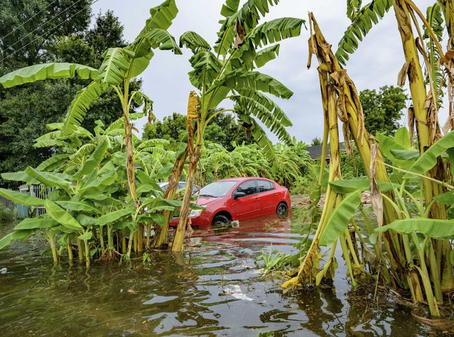 Flooding comes up the wheels of a parked car on Belfast Street near Eagle Street in New Orleans July 10, 2019 after flooding from a 100-year storm from a tropical wave system in the Gulf Mexico dumped lots of rain. (Photo by Matthew Hinton/AP Photo)