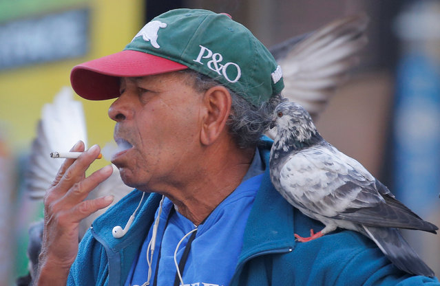 A pigeon sits on the shoulder of a man as he smokes a cigarette in Sydney, Australia, May 11, 2017. (Photo by Jason Reed/Reuters)