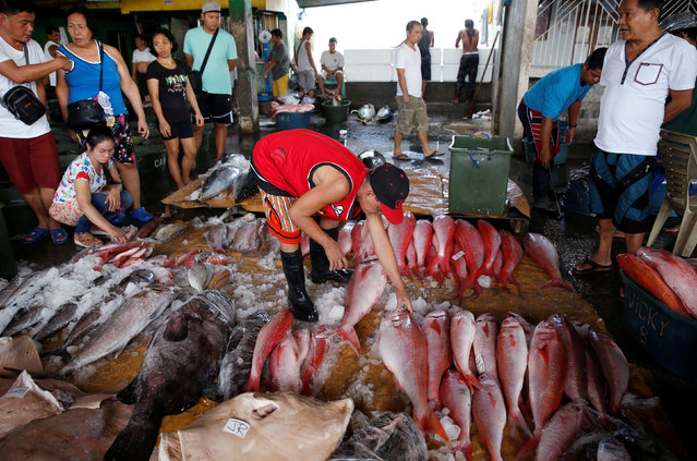A buyer inspects fish at a wholesale market at Navotas Fish Port in Navotas, Metro Manila, in the Philippines May 21, 2016. (Photo by Erik De Castro/Reuters)