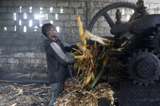 In this June 16, 2017 photo, Metson Pierre removes bagasse, fiber left over after pressing juice from sugar cane, from a grinding machine at the Ti Jean distillery where a sugar-based alcoholic drink called clairin is made in Leogane, Haiti. The 17-year-old, who was missing school, said he works to support himself after the death of his parents. (Photo by Dieu Nalio Chery/AP Photo)