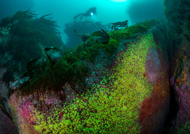 British waters wide angle category winner: Jewel Reef by Arthur Kingdon (UK) in Isles of Scilly, Cornwall. (Photo by Arthur Kingdon/Underwater Photographer of the Year 2020)