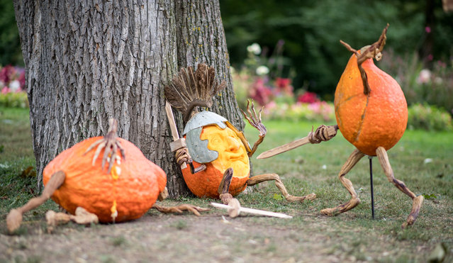 Carved pumpkins designed by US pumpkin artist Ray Villafane are pictured during a pumpkin exhibition in Ludwigsburg, southern Germany, on September 8, 2017. (Photo by Sebastian Gollnow/AFP Photo/DPA)
