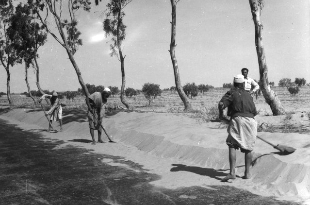 Workers clearing the road at Sabratha in Libya, 1950. (Photo by Edward Charles Le Grice/Le Grice)