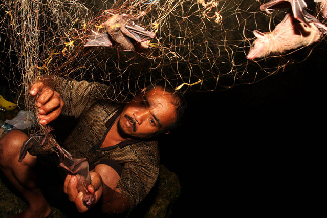 Bat catcher Gunawan collects bats captured in a cave on July 31, 2009 in Yogyakarta, Indonesia